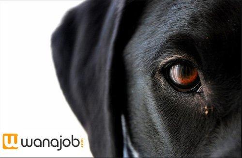 Avant première: Wanajob devient le partenaire emploi officiel de Lycos