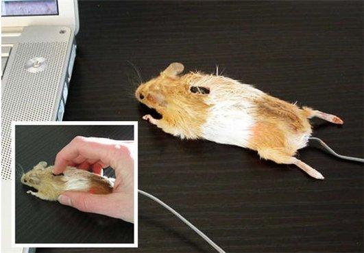 ça c'est de la souris ( âmes sensibles s'abstenir )