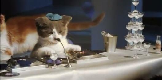 Bouygues Telecom aime les chatons