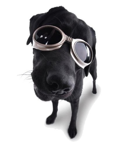 [image du jour] The Biker's Dog