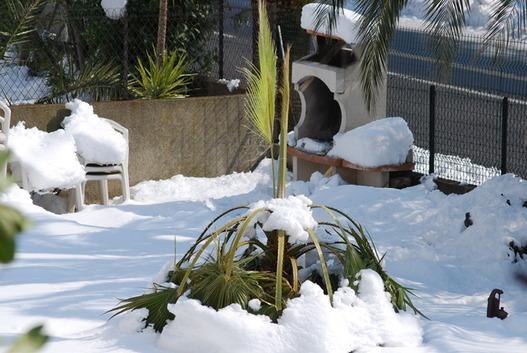 Un palmier un peu spécial