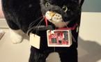 Followez votre chat sur twitter grâce à Sony